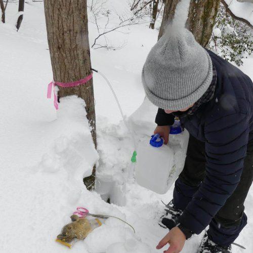週末林業体験〜メープルシロップから森の未来を考えませんか?〜